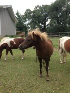 Seriously.  Miniature freakin' horses.